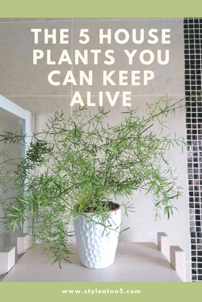 5 easiest plants to keep alive, low maintenance and beautiful looking
