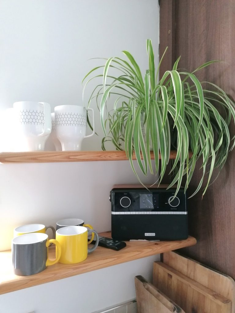 Very low maintenance houseplant, thrives all on its own, the spider plant.