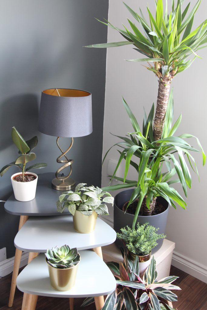 Plants in the home of Style At No.5, another way to feel happier in your home.